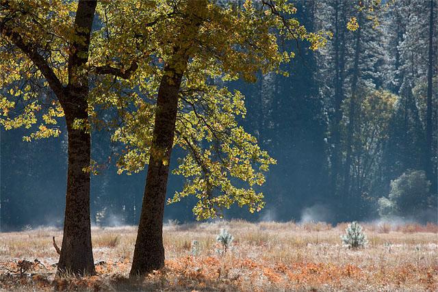yosemite oaks